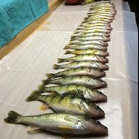 Other Freshwater Fishing Report 12/20/2015