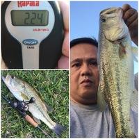 Missouri City Ponds Fishing Report 04/25/2016