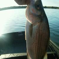 Boerne Lake Fishing Report 10/03/2015
