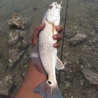 San Luis Pass Fishing Report 02/01/2017