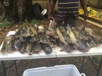 LNVA Canal and Ponds Fishing Report 05/18/2015