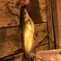 White Rock Lake Fishing Report 05/28/2016