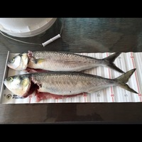Other Saltwater Fishing Report 06/05/2016