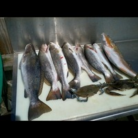 Lake Austin (Bay City) Fishing Report 10/28/2013