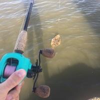 Seabrook Ponds Fishing Report 06/16/2017