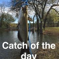Live Oak Pond Fishing Report 03/08/2016
