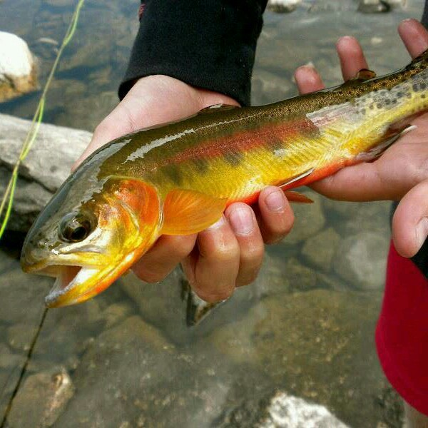 Off the Water Fishing Report 04/10/2014