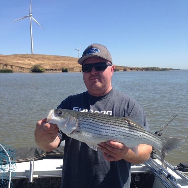 Striped bass sacramento san joaquin river delta ca for California delta fishing report