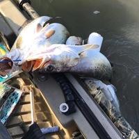 East Matagorda Bay Fishing Report 12/15/2016