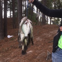 Kingwood Ponds Fishing Report 11/06/2016
