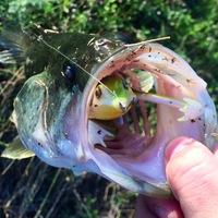 Rio Grande River Fishing Report 05/01/2015