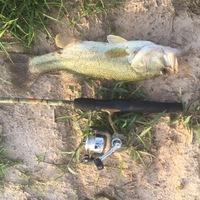 Lake O' the Pines Fishing Report 07/13/2016