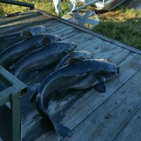 Sealy Ponds Fishing Report 10/30/2015