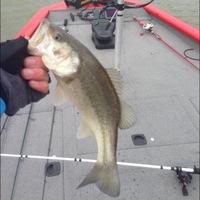 Lake Brownwood Fishing Report 02/01/2014