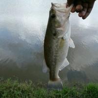 Houston Ponds Fishing Report 04/04/2017
