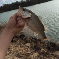 Katy Storm Sewer Fishing Report 02/28/2016