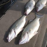 Proctor Lake Fishing Report 10/25/2013