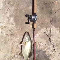 Comal River Fishing Report 06/28/2015