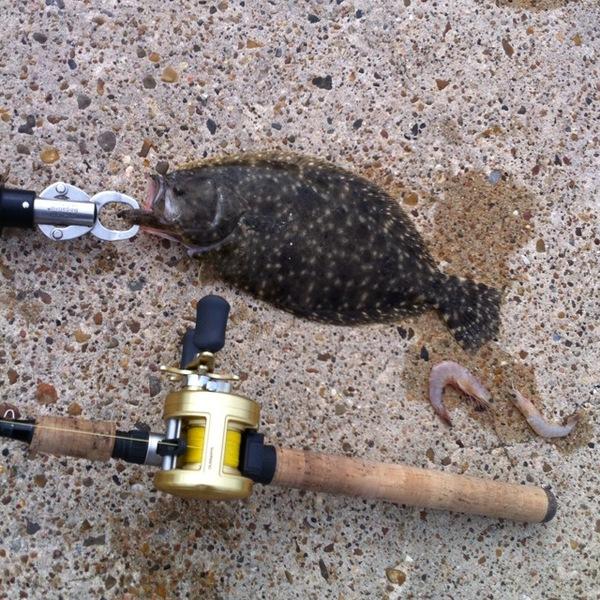 U A Sheepshead Bay Flounder - Espiritu Sa...