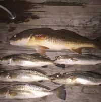 Bay St Louis Fishing Report 07/26/2017