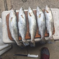 Colorado River Fishing Report 12/27/2016