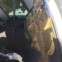 Watson Lake Fishing Report 08/13/2017