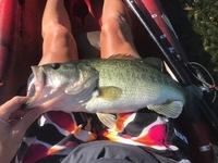 Lake Pflugerville Fishing Report 07/20/2017