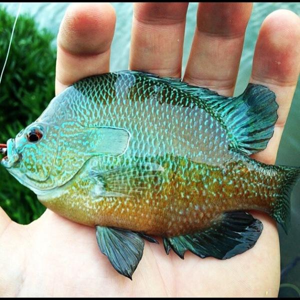 Dallas Ponds Fishing Report 02/08/2014