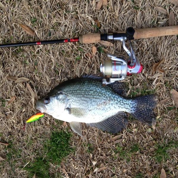 Ross r barnett reservoir fishing reports fishingscout for Ross barnett fishing report