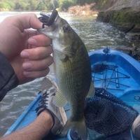 Colorado River Fishing Report 09/18/2016