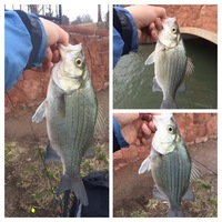 Off the Water Fishing Report 03/07/2017