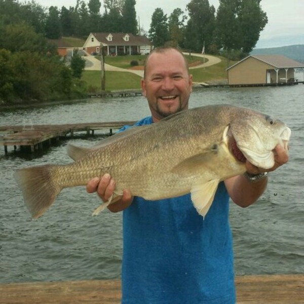 Freshwaterdrum gaspergou lake guntersville al for Fishing lake guntersville