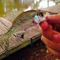 Fannett Ponds Fishing Report 06/15/2014
