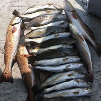 Port Mansfield Fishing Report 06/10/2016