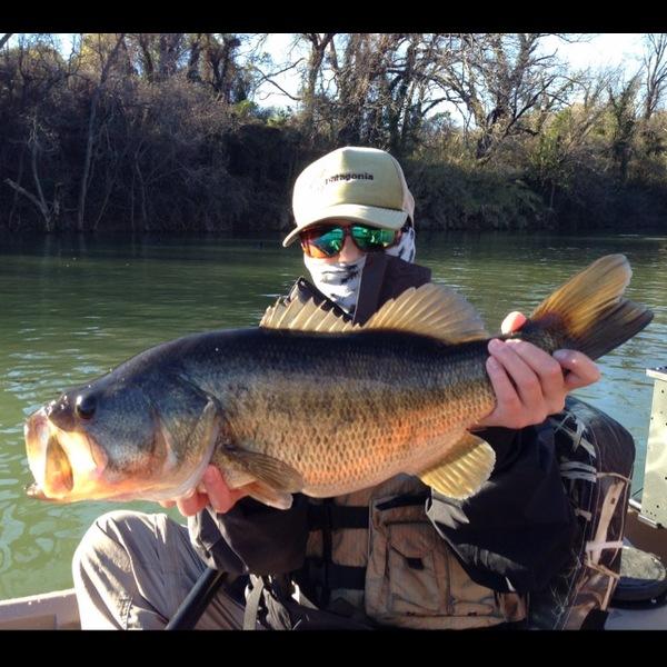 Largemouth bass lady bird lake tx fishingscout for Benbrook lake fishing
