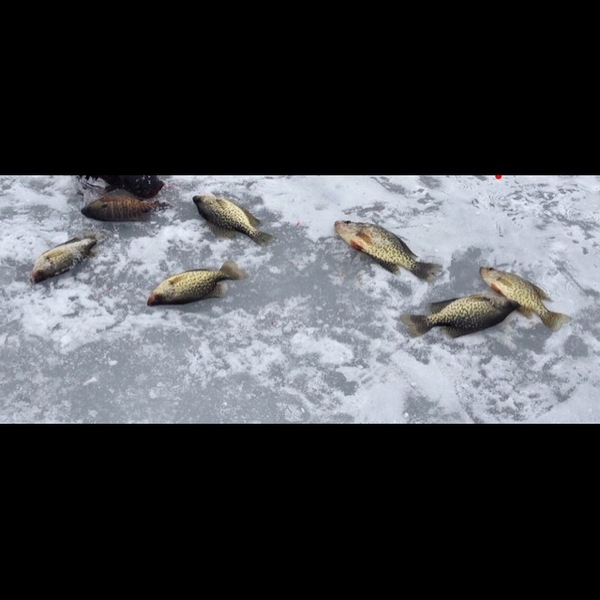 Black crappie other freshwater ny fishingscout for Freshwater fishing ny