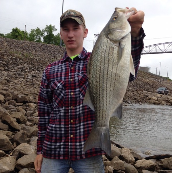 Potomac river south branch fishing reports fishingscout for Wv fishing report