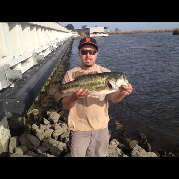 California delta fishing reports fishingscout mobile app for California delta fishing report