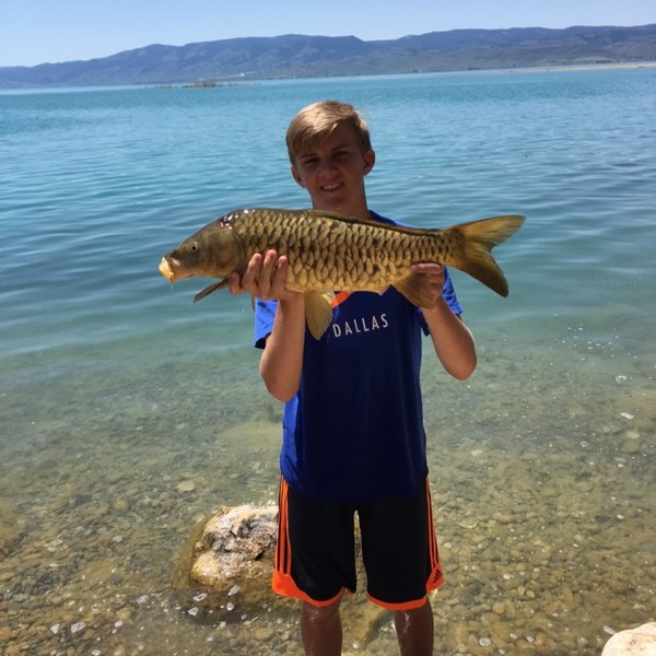 utah lake fishing reports fishingscout mobile app